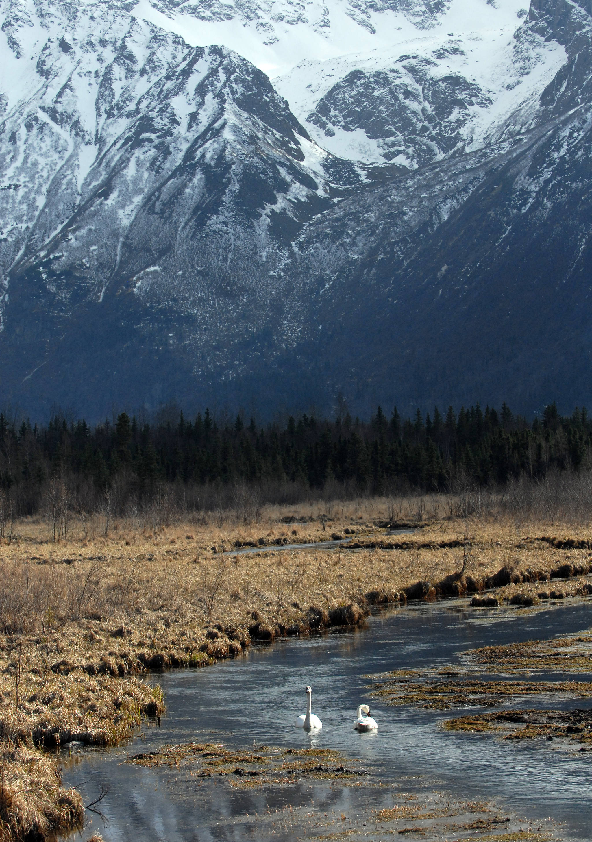 Eagle River Nature Center ideal for spring wildlife viewing in Alaska