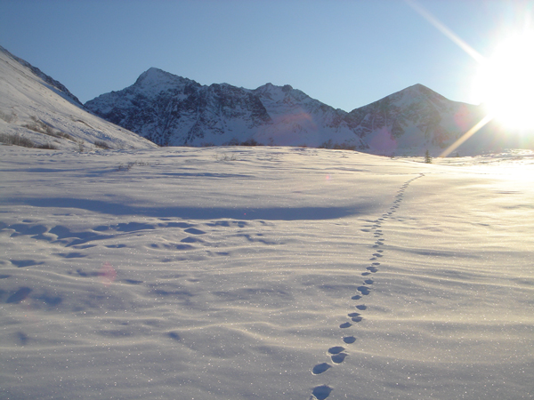 snowshoe tracks essay Example 1: you are snowshoeing up a steep incline with a 50 lb pack   critical in winter travel since you may be off trail or trails may be hidden by the  snow.